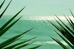 liści spiczaste morza Obrazy Stock