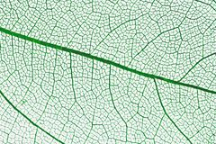 liści white makro Fotografia Royalty Free