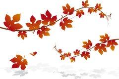 Liścia czerwony kolor   ilustracji