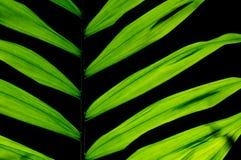 Liścia houseplant Obrazy Royalty Free