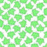 Liścia klonowego wzór ilustracji