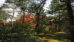 Liścia koloru zmiana Kyoto Japonia Fotografia Stock