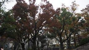 Liścia koloru zmiana w Japonia Zdjęcie Royalty Free