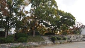 Liścia koloru zmiana w Japonia Zdjęcia Stock