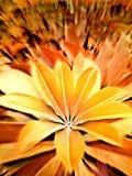 Liścia kwiat Zdjęcia Royalty Free