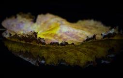 Liścia odbicie Fotografia Stock