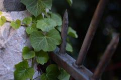 Liścia ogrodzenie Obraz Royalty Free