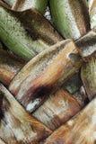 Liścia ostrza zieleni lampasy. Zdjęcia Stock