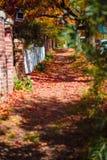 Liścia pas ruchu Zdjęcie Royalty Free