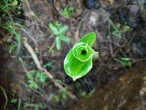Liścia rozwój obraz stock