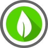 Liścia szablon i logo Zdjęcia Stock
