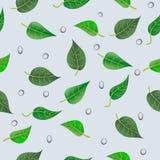 Liścia wzór z kroplami Zdjęcie Stock