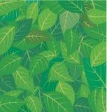 liście ilustracji
