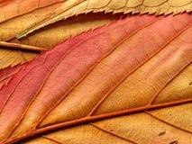 liście obraz stock