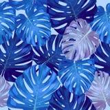 Liście drzewko palmowe bezszwowy wzór Obraz Royalty Free