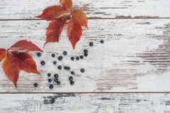Liście i jagody dziki winogrono na drewnianym stole Zdjęcie Stock