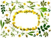 Liście i kwiat rama Zdjęcia Stock