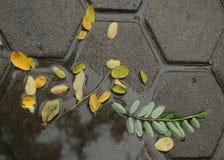Liście na brukowego kamienia bruku Zdjęcie Royalty Free