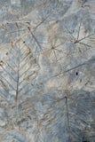 Liście na cement ziemi zdjęcie royalty free