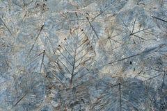 Liście na cement ziemi fotografia stock