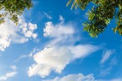 Liście na niebieskim niebie Obraz Royalty Free