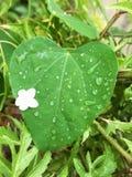 Liście po deszczu Fotografia Royalty Free