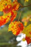 liście spadków obraz stock