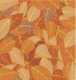 liście spadków ilustracja wektor