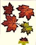 liście spadków Zdjęcie Stock