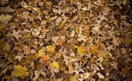 liście spadków Fotografia Stock