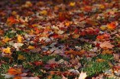 liście spadków Fotografia Royalty Free