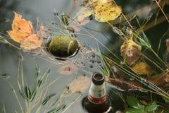 Liście w jesieni Obraz Royalty Free
