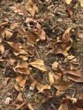 Liście w jesieni Obrazy Stock