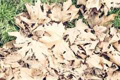 Liście w jesieni Obrazy Royalty Free