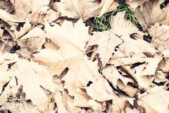 Liście w jesieni Obraz Stock