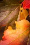Liście w jesieni i zimy kolorach Zdjęcie Stock