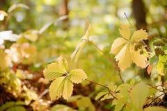 Liście w jesiennym lesie w Kokorinsko krajobrazu terenie w republika czech Obrazy Stock