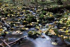 Liście w strumieniu Zdjęcie Royalty Free