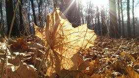 Liście W The Sun Zdjęcie Stock
