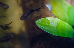Liście z kroplami woda Fotografia Royalty Free