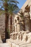 li egiptu szereg palmowe drzewne Zdjęcie Stock