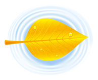 liść jesienny basen Zdjęcie Royalty Free