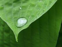 liść opadowa porada Obraz Stock