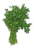 liść płaską pietruszka zdjęcia royalty free