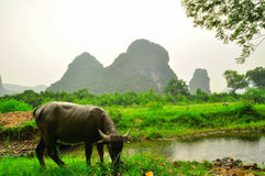 Li river mountain landscape in Yangshuo Guilin Stock Images