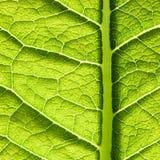 liść zielona tekstura Zdjęcie Stock
