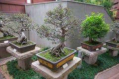 Lian Garten alte Bonsais Hong Kong Nans Lizenzfreie Stockbilder