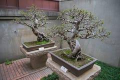 Lian Garten alte Bonsais Hong Kong Nans Stockbilder