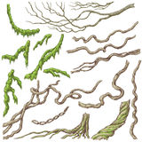 Liana Branches Sketch. Hand drawn branches and leaves of tropical plants. Liana and moss-covered twigs isolated on white. Vector sketch stock illustration