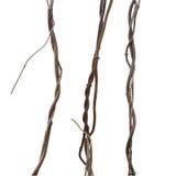 Liana, jungle climbing vines set isolated on white background, c Royalty Free Stock Images